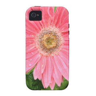 Rosa Gerber Gänseblümchen iPhone 4 Hülle