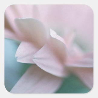 Rosa Gerbera-Gänseblümchen Quadratischer Aufkleber