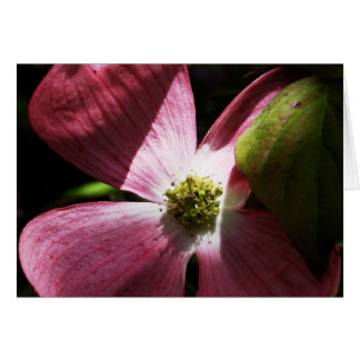 Rosa Hartriegel-Blume - Gruß-Anmerkung Karte