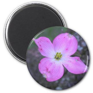 Rosa Hartriegel Runder Magnet 5,7 Cm