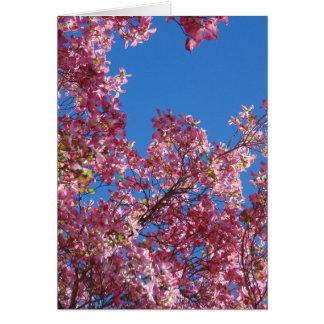 Rosa Hartriegel und blauer Himmel Karte