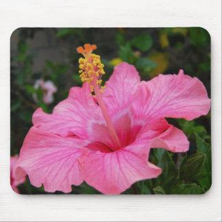 Rosa Hawaii-Hibiskus Mousepads