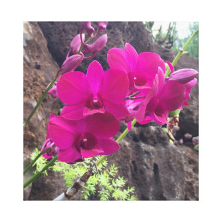 Rosa hawaiische Blumen Leinwanddruck
