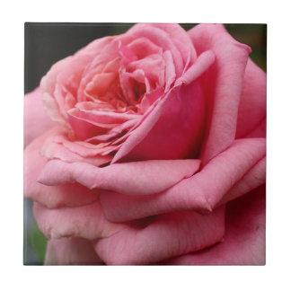 Rosa hübsche Blumenphotographie der Rosen-I Keramikfliese