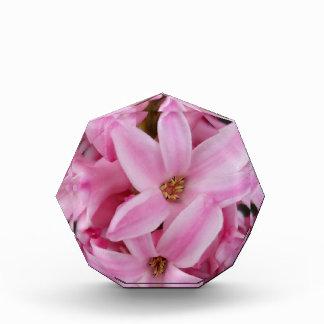 rosa Hyazinthen-Blume Acryl Auszeichnung