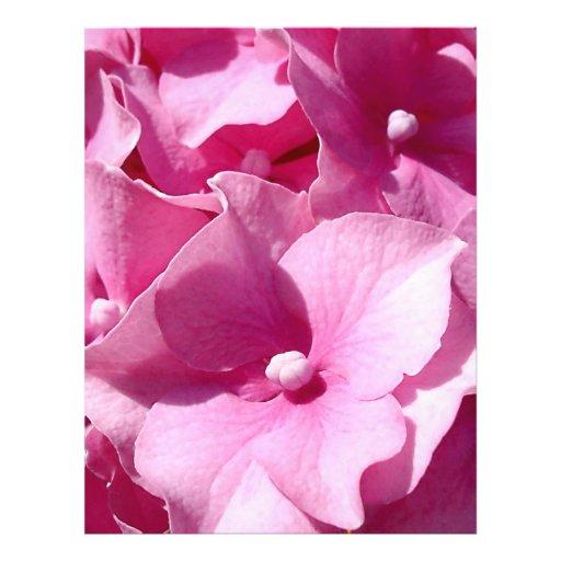 Rosa Hydrangea-Flyer