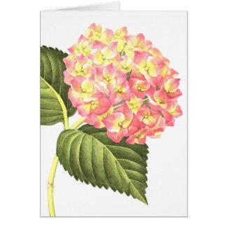 Rosa Hydrangea Karte