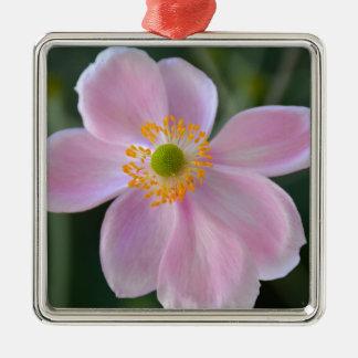 Rosa japanische Anemonen-Blume Silbernes Ornament