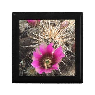 Rosa Kaktus-Blume Geschenkbox