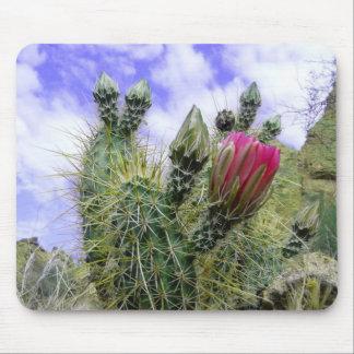 Rosa Kaktus-Blume Mauspads