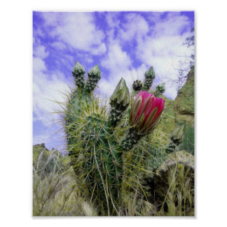 Rosa Kaktus-Blume Plakat