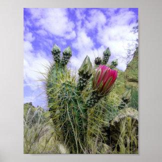 Rosa Kaktus-Blume Poster