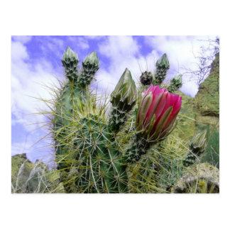 Rosa Kaktus-Blume Postkarte