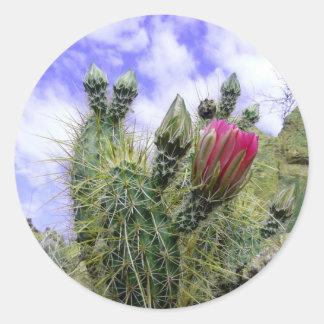 Rosa Kaktus-Blume Runder Aufkleber