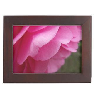 Rosa Kamelien-Blume von der Seite Erinnerungsdose