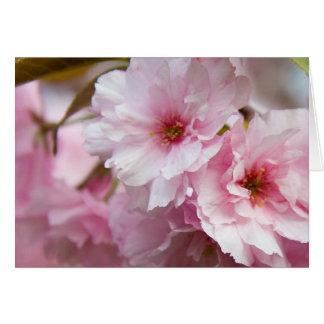 Rosa Kirschblüte-Blume Karte