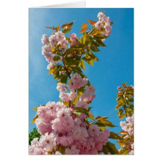 Rosa Kirschblüte-Blumen Karte