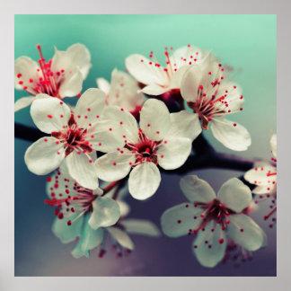 Rosa Kirschblüte, Cherryblossom, Kirschblüte Poster