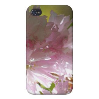 Rosa Kirschblüten iPhone 4 Fall iPhone 4 Schutzhülle