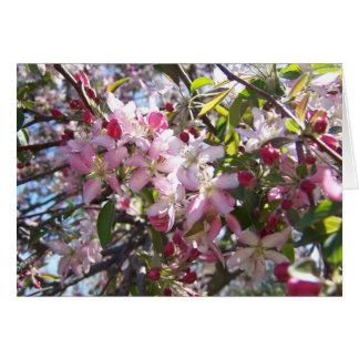 Rosa Kirschblüten Karte