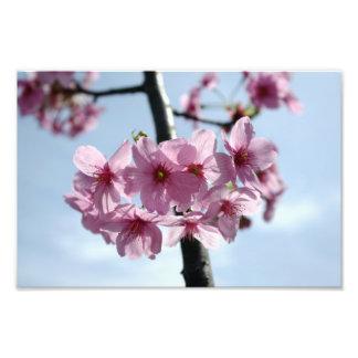 Rosa Kirschblüten und hellblauer Himmel Fotografie