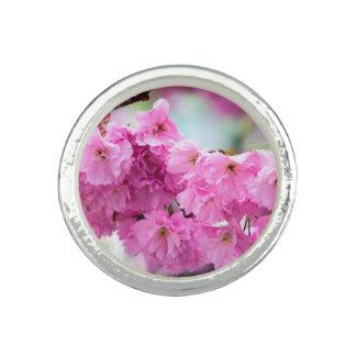Rosa Kirschkirschblüte-Baum Ring