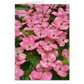 Rosa kousa Hartriegel-Blumen-Grußkarte Karte