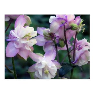 Rosa lila Columbine-Blumen Postkarte