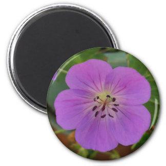 Rosa-lila Pelargoniemagnet Runder Magnet 5,7 Cm