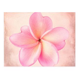 Rosa lila Plumeria-Blumen-Rosa-Hintergrund Postkarte