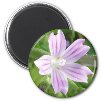 Rosa-lila und weiße gestreifte Wildblume auf Runder Magnet 5,1 Cm