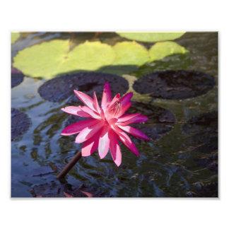 Rosa Lilie Photos