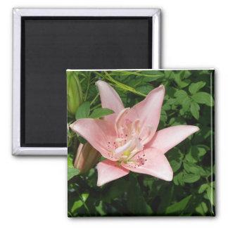 Rosa Lilien-Magnet Quadratischer Magnet