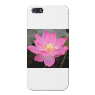 Rosa Lotos-Blume in der Blüte Etui Fürs iPhone 5