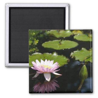 Rosa Lotos-Wasserlilie-Libellenmagnet Quadratischer Magnet
