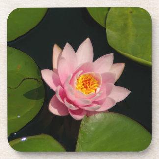 Rosa Lotos-Wasserlilie Untersetzer