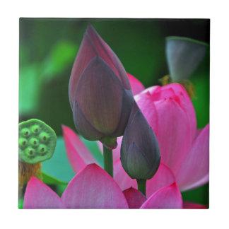 Rosa Lotus-Blüten Fliese