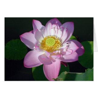 Rosa Lotus Karte
