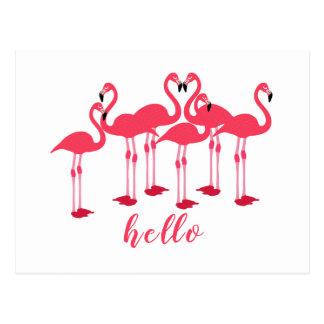 "Rosa Menge der Flamingos ""hallo "" Postkarte"
