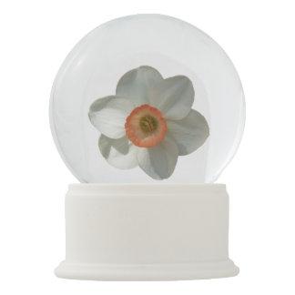 Rosa Narzissen-schöne Frühlings-Blume Schneekugel