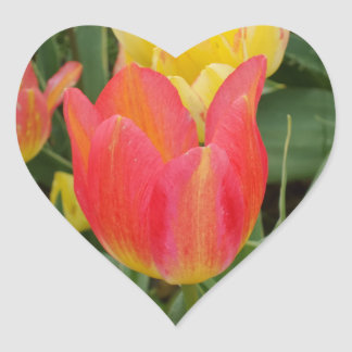 Rosa orange Gelb-Tulpe-Blumen-Herz-Aufkleber Herz-Aufkleber