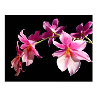 Rosa Orchidee Postkarte
