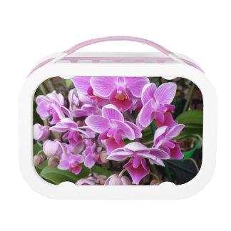 Rosa Orchideen Brotdose