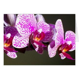 Rosa Orchideen Karte