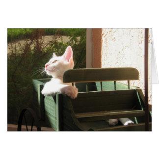 Rosa Panther reitet wieder Grußkarte