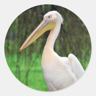 Rosa Pelikanvogel mit dem langen Schnabel Runder Aufkleber