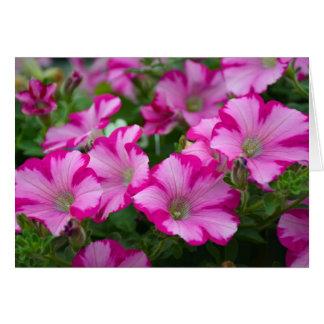 Rosa Petunie-Blumen Karte