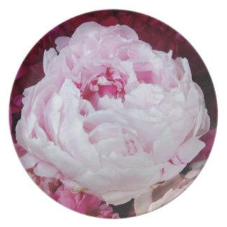 Rosa Pfingstrosen-Aufkleber Flache Teller