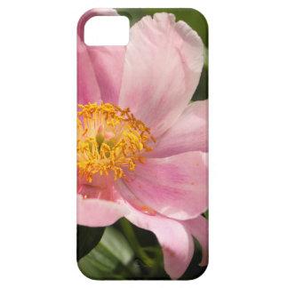 Rosa Pfingstrosen-Blume völlig offen iPhone 5 Etui