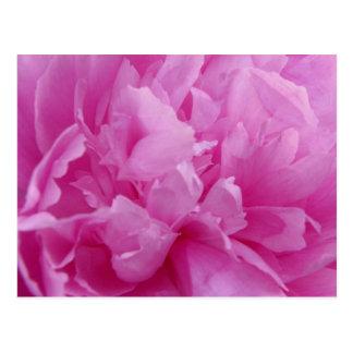 Rosa Pfingstrosen-Blumenblatpostkarte Postkarte
